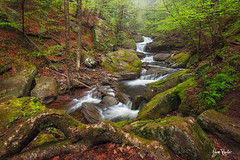 spring fling ([Adam Baker]) Tags: nature fog forest canon moss spring stream hiking fresh pa cpl 1740l raing rickettsglenstatepark adambaker 5dmkii