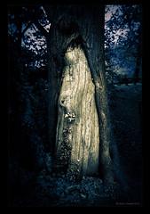 Golden tree bark (Brad J Gerrard) Tags: summer england white black tree english june paintshop golden countryside woods monotone 2012 topaz tamronspaf2875mmf28xrdildasphericalif eshercommon canon5dmkii lightroom4