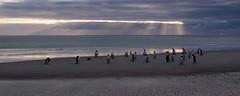 Early morning at the Neck (World Traveller Photography) Tags: morning sea beach dawn penguins gentoo falklands falklandislands sunbeams saundersisland