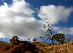 Landscape journey 22_23_24_june 089 (Orangedrummaboy) Tags: trees sky clouds creek forest landscape walk au australian australia bushwalking canberra adventures aussie dslr contrasts act downunder deadtrees mittagong greatoutdoors humehighway tragicbeauty canberranaturereserve canberratosydney davidjburke orangedrummerboy davidjohnburke© orangedrummaboyphotographycanberra djburke httpswwwfacebookcomorangedrummaboy thmccit httpstwittercomorangedrummaboy