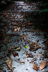 Covered With Leaves (SK snapshots) Tags: friedhof cemeteries holland netherlands cemetery grave graveyard leaves amsterdam nikon laub covered grab bltter niederlande begraafplaats zorgvlied bedeckt d90 grabsttte grabplatte coveredwithleaves sksnapshots