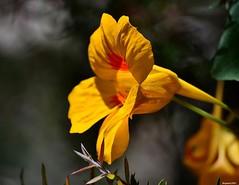 Mothers Day 2014. (Eugene1959) Tags: explore myfrontyard experimentations flowersandmacros nikond3100 mothersday2014