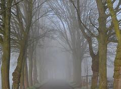 140112 aabN 140602  Ththi (thethi (don't like beta groups)) Tags: belgium belgique hiver route arbres paysage campagne brouillard namur alle wallonie faves70 setvosfavorites setnamurcity ruby22 ruby20 bestof2014 vgtauxquot albumjanvier setvegetaux