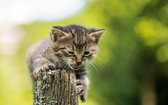 kittens (23) (Vlado Fereni) Tags: kitty kittens cats catsdogs animals zagorje hrvatskozagorje hrvatska croatia nikond600 tamron9028 animalplanet