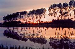 Magie camarguaise (ceszij) Tags: camargue reflections riflessi reflejos provence france francia