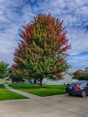 Autumn Advance (kendoman26) Tags: hdr nikhdrefexpro2 fuji fujifinepix fujifinepixf750exr autumn autumncolors fall fallcolors fallcolor sky bluesky morrisillinois
