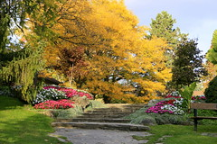 Autumn greetings from Toronto. (Ming chai) Tags: autumngold goldenfall coloursofthisautumn coloursofthisfall edwardgarden ontario toronto canada