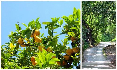mediterranean summer - lemons, small streets