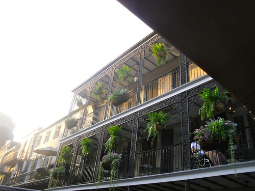 Ferns on the Balconies