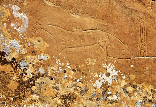 Horse & Lichen