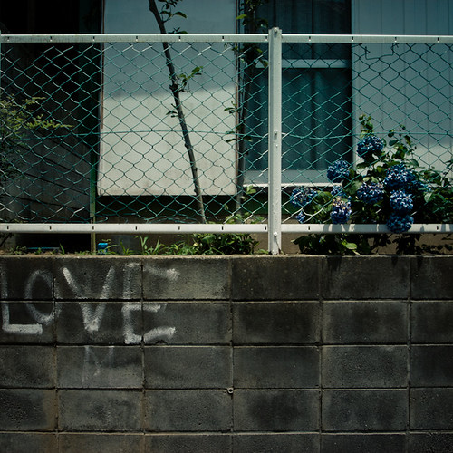 Love Wall Hydrangrea