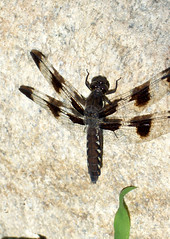 Dragonfly_63011d