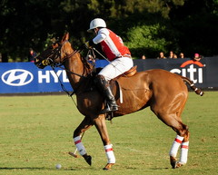 117th Hurlingham Club Open Championship, Argentina / 117 Abierto de Hurlingham YPF () Tags: vacation horse holiday game latinamerica southamerica argentina argentine leather caballo cheval nikon pony 70300mm polo rtw pferd vacanze tack roundtheworld sudamerica triplecrown  polopony amricalatina globetrotter southernhemisphere ceffyl ypf polomatch  poloclub argentini argentinien  hurlingham amricadelsur polofield sdamerika zonea hurlinghamclub worldtraveler  ariannin repblicaargentina  etiquetanegra chukkas argentinidad pologame poloteam d700   zonaa nikond700 chapauno  chukkers  ellerstina abiertodehurlingham     triplecorona  117thhurlinghamopen hurlinghamopen ellerstinaetiquetanegra chukers   ellerstinanegra