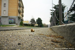 A different point of view (Mr. Emagal) Tags: road street punto strada grigio gray vista prospettiva