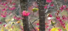 #777  (John&Fish) Tags: bird nature birds wow photography taiwan best 2012 deepavali agorathefineartgallery