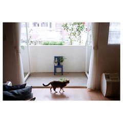 (Kerb 汪) Tags: home cat hana april analogue miao kerb 2012 植物園 agfaoptima1035 agfaoptimasensor 201204 efinitiuxisuper200 kerbwang agfaoptima1035film039 數碼1906