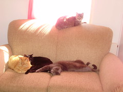008 (aeverett55) Tags: cats cat kitties