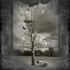 "The dead tree? (Mara ~earth light~) Tags: tree texture nature photoshop prayer creativecommons meditation healing buddism "" deepavali ourtime soulscapes artdigital idream contemporaryartsociety fantasticnature innamoramento alberoefoglia romanceintheair memoriesbook mara~earthlight~ lovelymotherearth"" ""sweetfreedom"" truthandillusion"