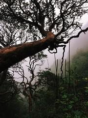 IMG_9152 (Seif Sallam) Tags: travel vietnam sapa fansipan hiking trekking