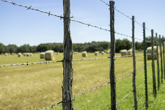 Hard to get to (DustinJ05) Tags: leica m typ240 50mm f14 f1 summilux wide open hay field sky grass fence twine string wire