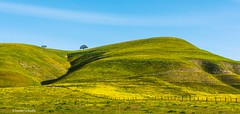 San Benito County (Photosuze) Tags: landscape spring sanbenitocounty california tree grass flowers nature sky