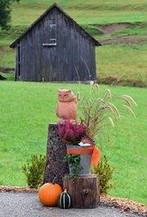 Autumnal decoration (:Linda:) Tags: germany thuringia village brden bucket owl flowerpot bird barn pumpkin vegetable treestump