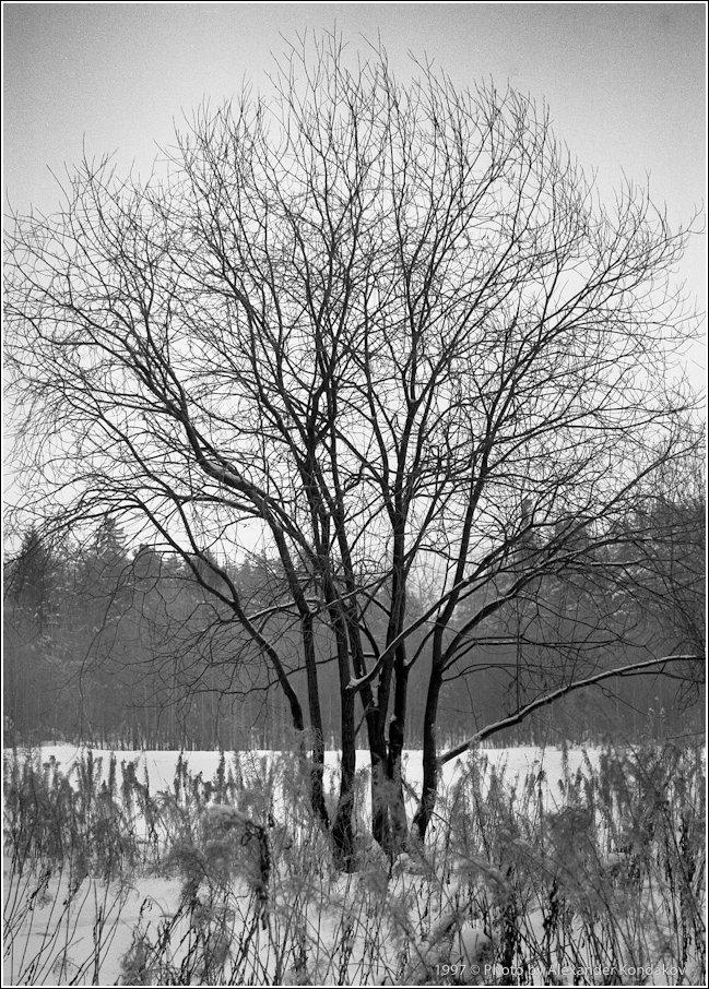 Зимний этюд 1997©Photo by Alexander Kondakov