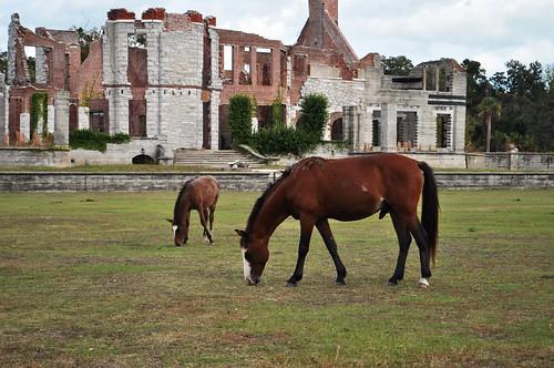 Chasing Wild Horses on Cumberland Island