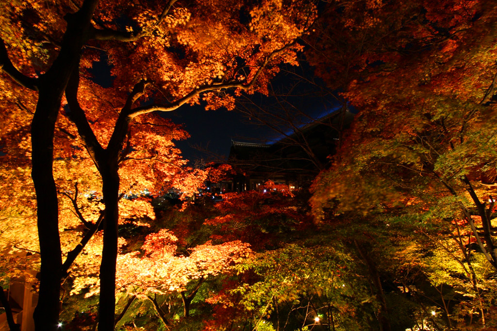 Kiyomizu-dera Illumination 2010  (8)