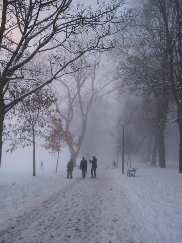 meadows in the snow and mist-5