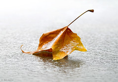 Crisp (Ben Heine) Tags: winter red wallpaper orange snow macro art fall leave texture love ice nature beauty yellow closeup contrast automne season photography death freedom golden scenery frost die force organics belgium image zoom mort hiver small sneeuw picture coucher bruxelles peaceful atmosphere fresh souvenir crisp libert tiny romantic subject neige strength remembrance tomorrow past breezy oblivion lay existence forget imagery autmn feuille frozenlake vibration remembering saison croustillant cryonics snieg lacgel creativecomposition benheine flickrunited samsungimaging nx10 benheinecom cryogenized