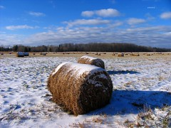 Roll In The Hay (siskokid) Tags: trees winter sky snow nature field wisconsin clouds farm hayrolls rothschild marathoncounty omot countyhighwayx