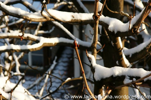 Winter 1_2010 12 02_0982