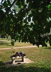 A walk in the park (AvikBangalee) Tags: park morning people tree green grass bench peace sleep homeless streetphotography lifestyle tired dhaka dailylife bangladesh socialdocumentary