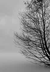 Silence  [Explored] (Aspiriini) Tags: winter mist snow tree fog suomi finland lumi talvi puu kaarina littoinen usva sumu explored littoistenjrvi jonilehto aspiriini