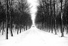 The Road Home (ICT_photo) Tags: road winter snow tree way drive wind path flakes blizzard lined ictphoto ianthomasguelphontario