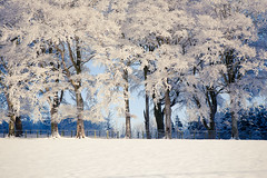 Dusted Avenue (steveland303) Tags: trees winter snow cold scotland woods canon5d magical clydevalley