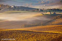 Le Marche Region (lucagiustozzi.com) Tags: lemarche vinitaly regionemarche vinodellemarche