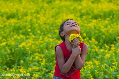 Little Master{ EXPLORED} (saifsohel) Tags: flower color field yellow freedom kid child little joy bangladesh vilage mukti   keranigonj  atibazar hizla masterdfield