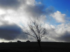 cloud dressing (Harlory) Tags: blue cloud tree branche