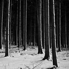 whitelines2 (joe zander) Tags: leica blackandwhite tree nature landscape voigtlander schwarzweiss m9 nokton5015