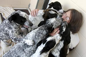 Woman being kissed by a group of dogs