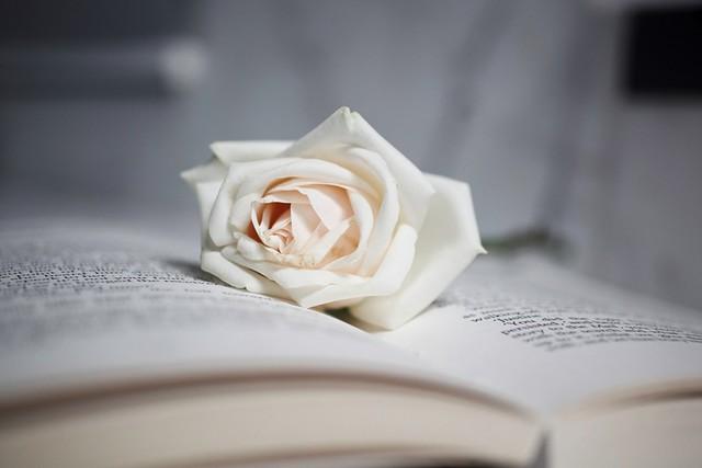 roses 003
