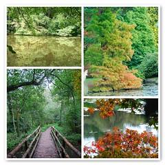 Autumn at Sheffield Park & Garden (antonychammond) Tags: uk trees england lake leaves nationaltrust eastsussex sheffieldparkgarden beautifulphoto natureplus abigfave flickraward citrit esenciadelanaturaleza