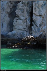 All By Myself (raul_the_truck) Tags: sea green bird nature water rock mexico nikon day sunny pelican picnik