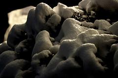 Catene Montuose (sgrazied) Tags: life trees winter light shadow white snow mountains night silver ombra rimini canoneos20d neve inverno bianco freddo notte luce edera argentovivo sgrazied interphoto candore catenemontuose ilmiogiradino miaffaccioallafinestra