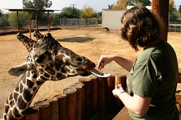 Me feeding a giraffe at the Wildlife World Zoo