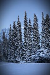 Winter Night (Photofreaks [Thank you for 2.000.000 views]) Tags: winter moon snow cold night germany dark geotagged essen ruhr werden fischlaken photofreaks geo:lat=5138584770118872 geo:lon=7031928788391095 wwwphotofreakseu adengs