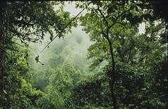 (7277) Tags: fog 50mm rainforest costarica takumar f14 badass canopy zipline iso1600 pushprocessed v500 fujiprovia400x