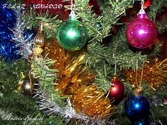Para mis amig@s de flyckr (andresbasurto) Tags: amigos familia navidad colores árbol alegria feliz nacimiento zorionak celebración religión
